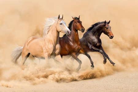 Photo pour Three horse run in desert sand storm - image libre de droit