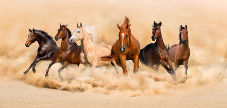 Photo for Horse herd run in desert sand storm - Royalty Free Image