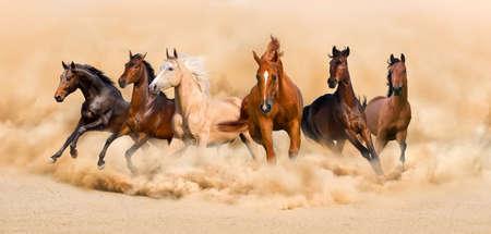 Photo pour Horse herd run in desert sand storm - image libre de droit