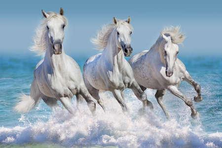 Photo pour Horse herd run gallop in waves in the ocean - image libre de droit
