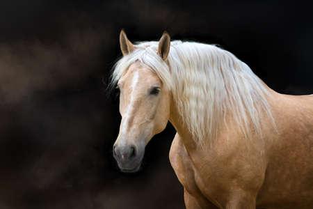 Foto de Palomino horse with long blond mane - Imagen libre de derechos