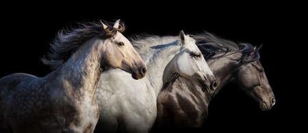 Photo pour Horse herd portrait run gallop isolated on black background - image libre de droit