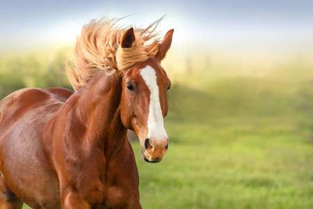 Photo pour Beautiful red horse with long mane portrait in motion - image libre de droit