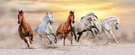 Photo pour Horse herd run fast in desert dust at sunset - image libre de droit