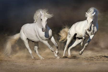 Photo pour Cople horse in motion in the desert against a dramatic dark background - image libre de droit