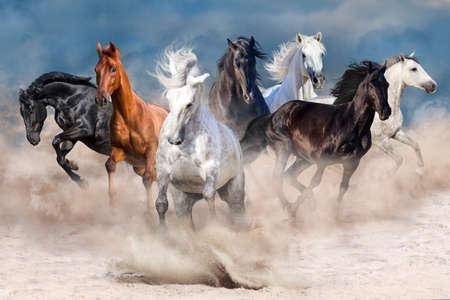 Photo pour Horse herd run in desert dust storm - image libre de droit