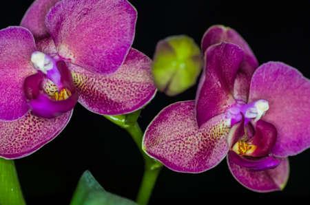 Photo pour Red Orchid - image libre de droit