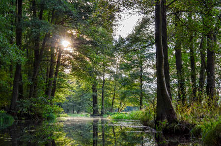 Foto de landscape with rivers and forest in the Spreewald in Brandenburg in Germany - Imagen libre de derechos