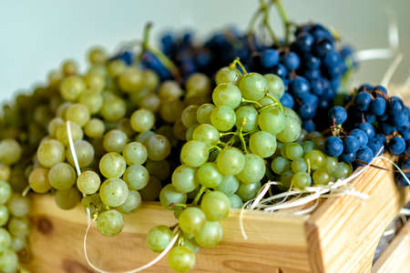 Photo for fresh wine grapes after the harvest in September - Royalty Free Image