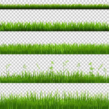 Illustration pour Green Grass Borders Big Set, Isolated on Transparent Background, Vector Illustration - image libre de droit