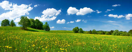 Photo pour Field with dandelions and blue sky - image libre de droit