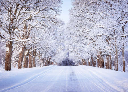 Photo for Alley in snowy morning - Royalty Free Image