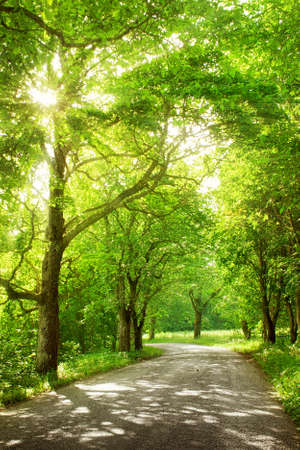 Foto de asphalt road with trees on the side in summertime - Imagen libre de derechos