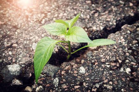 Foto de green plant growing from crack in asphalt - Imagen libre de derechos