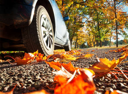 Photo pour Car on asphalt road on autumnr day at park - image libre de droit