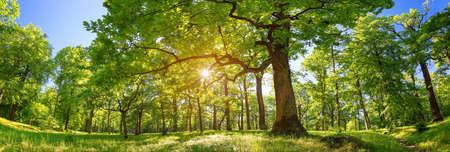 Foto de Tree foliage in morning light - Imagen libre de derechos