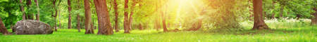 Photo for park panorama with trees and green foliage - Royalty Free Image