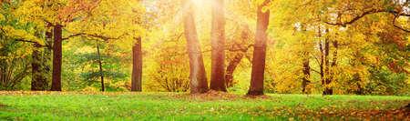 Photo pour trees on the field in autumn - image libre de droit