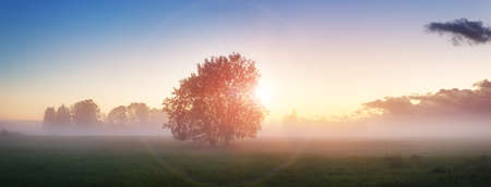 Foto de Tree foliage in morning light - Imagen libre de derechos