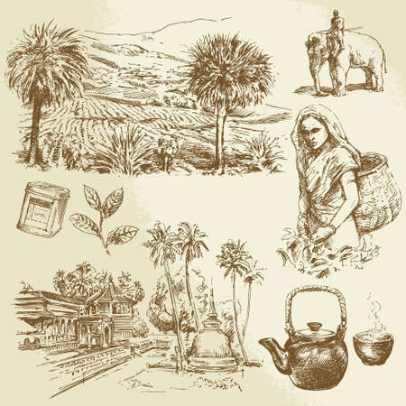 Illustration for tea plantations - hand drawn set - Royalty Free Image