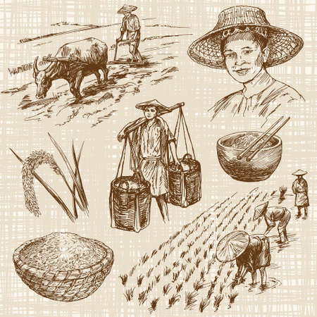 Illustration pour Hand drawn illustration, rice harvest - image libre de droit
