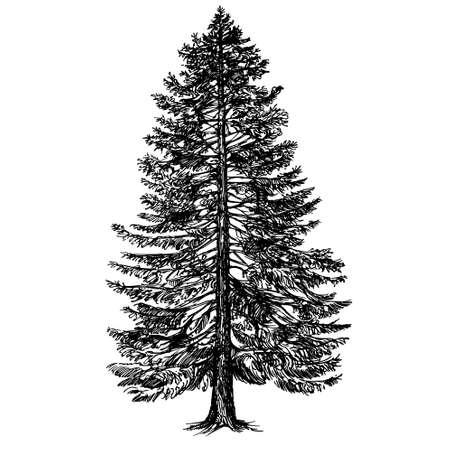 Illustration pour Hand drawn coniferous tree. - image libre de droit