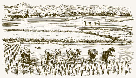 Illustration pour Asian farmers working on Field. Hand drawn illustration. Rice harvest. - image libre de droit