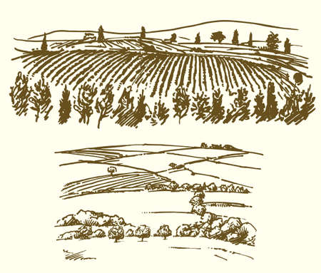Illustration pour Vineyard, agricultural landscape illustration. - image libre de droit