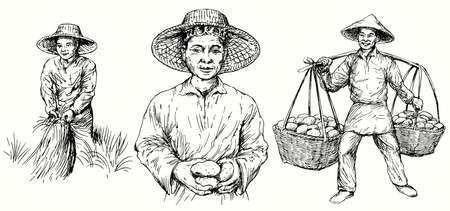 Illustration pour Asian farmers harvest potatoes and rice. Hand drawn set. - image libre de droit