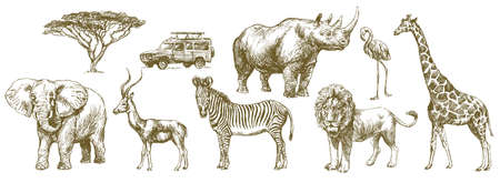 Illustration for African safari animal. Hand drawn set. - Royalty Free Image