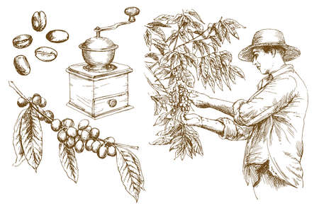 Ilustración de Farmer picking coffee beans. Hand drawn vector illustration. - Imagen libre de derechos