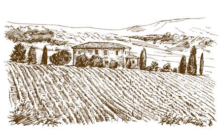 Illustration pour Vineyard landscape panorama. - image libre de droit