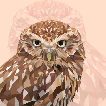 Photo for Owl - Royalty Free Image