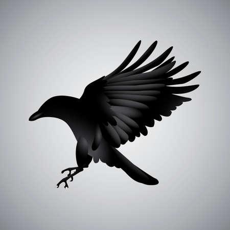 Illustration pour Crow - image libre de droit