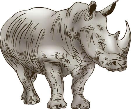 Illustration for Rhinoceros on white background - Royalty Free Image