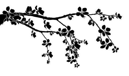 Black branch of beautiful seasonal cherry blossom