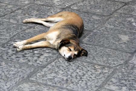 Homeless dog sleeping on the sidewalk