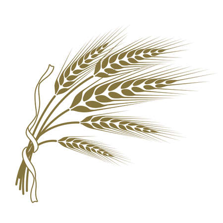 Illustration for spikelets of wheat tied with a ribbon - Royalty Free Image