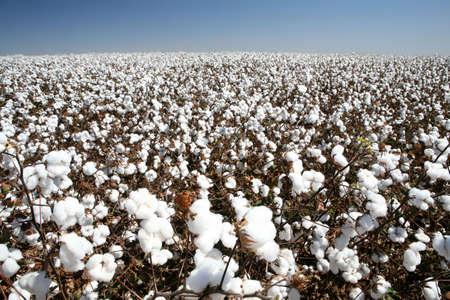 Photo pour ball of cotton in contrast with blue sky - image libre de droit