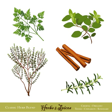 Universal Cooking Herbs and Spices  French Chervil, Italian Oregano, English Thyme, Cinnamon, Rosemary  Isolated on white