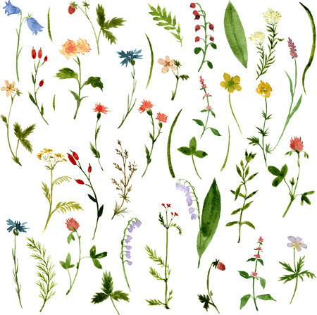 Illustration pour Set of watercolor drawing herbs and flowers, vector illustration - image libre de droit