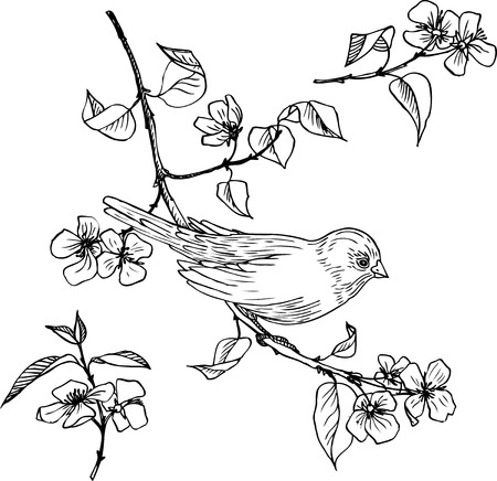 Illustration pour linear drawing bird at branch with flowers and leaves, set of hand drawn design element - image libre de droit