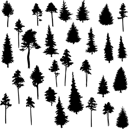 Illustration pour set of set of conifer trees, vector illustration - image libre de droit