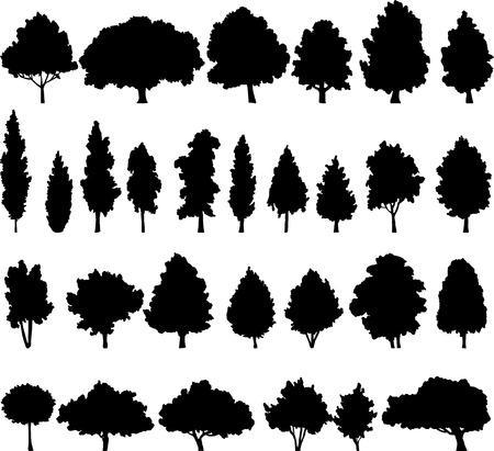 Illustration pour set of different deciduous trees, vector illustration - image libre de droit