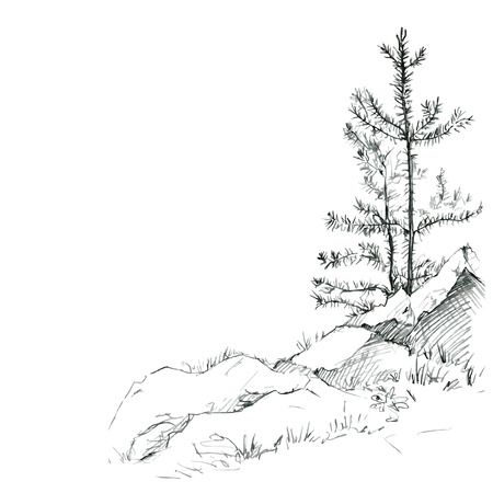 Ilustración de young pine trees and rocks drawing by pencil, sketch of wild nature, forest sketch, hand drawn vector illustration - Imagen libre de derechos