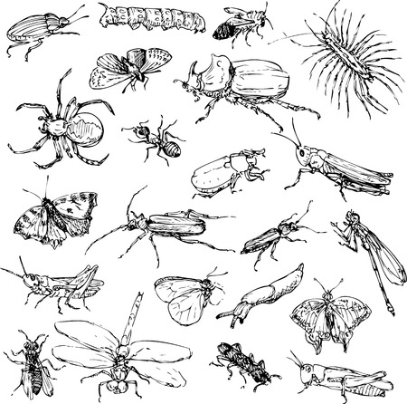 Illustration pour set of line drawing insects, hand drawn vector illustration - image libre de droit