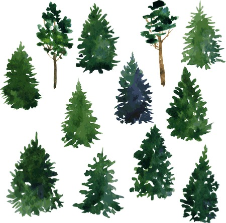 Illustration pour set of set of conifer trees drawing by watercolor, vector illustration - image libre de droit