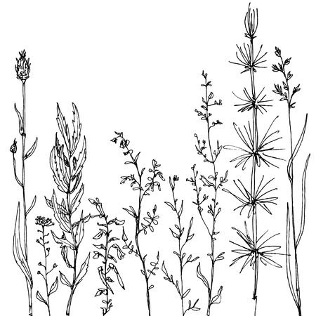 Illustration pour floral composition with ink drawing herbs and flowers, doodle wild plants, monochrome black line drawing floral card, hand drawn vector illustration - image libre de droit