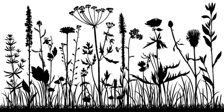 Illustration pour Vector background with silhouette of wild plants, herbs and flowers, botanical illustration, natural floral template - image libre de droit