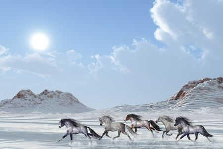 A herd of wild horses run in the snows of a bright winter day.